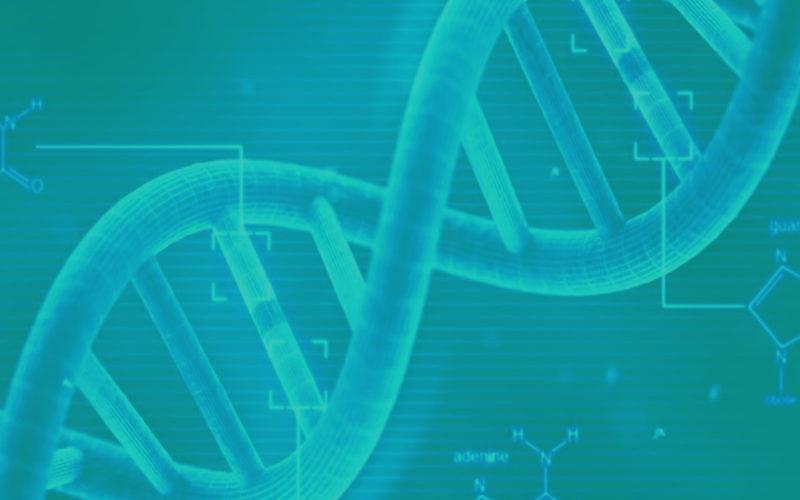DNA do Inovador